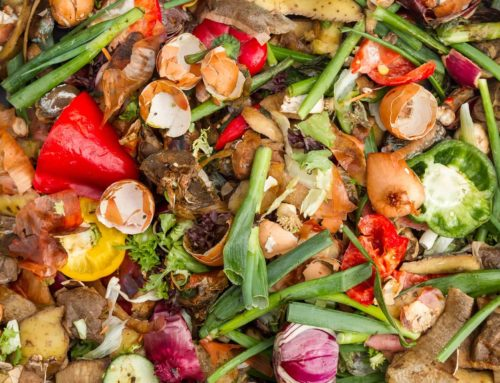 Best Ways to Dispose of Food Waste